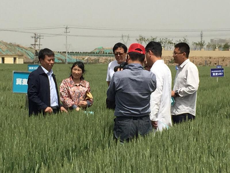 我所小麦育种团队参加由科技部组织的宣传片拍摄工作